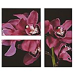 Large Pink Orchid Triple Canvas 75x90cm