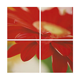 Large Gerbera Quad Canvas 80x80cm