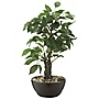 Tu Small Potted Tree
