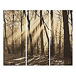 Sepia Forest Set of 3 Wall Art 70x90cm