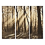 Sepia Forest Set of 3 Wall Art 120x100cm