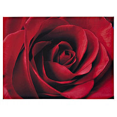 Velvet Rose Canvas 77x57cm