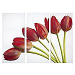 Large Red Tulips Set of 3 Wall Art 120x90cm