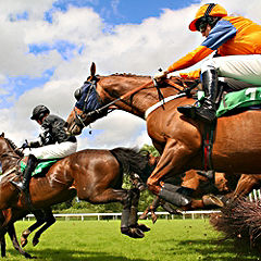Winning Horse Racing Day for Two Gift Experience