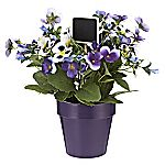 Tu Purple Pansy Pot