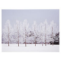 Snowy Trees Canvas